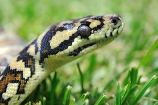 Snake catching and removal
